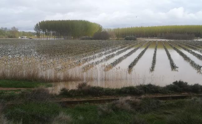 La crecida del Ebro arrasó cerca de 250 hectáreas de cultivo en Alfaro