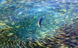 La diversidad de los peces se originó con la extinción de los dinosaurios