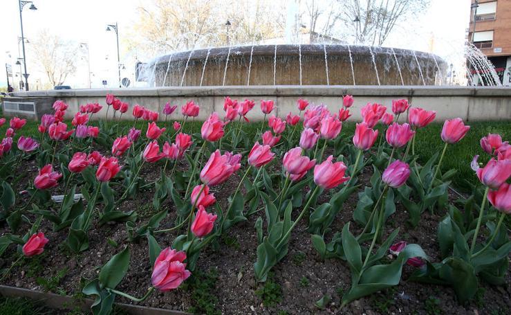 Despierta la primavera en Logroño