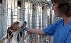 Logroño ya tiene más de 17.000 perros censados