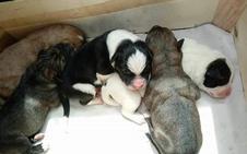 Buscan un hogar para cinco cachorros abandonados en un contenedor de Albelda