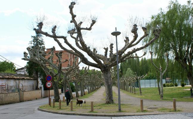 Los árboles del Paseo de San Julián serán fumigados contra el 'tigre del plátano'