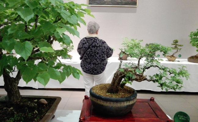 El arte milenario del bonsai, en Los Agustinos
