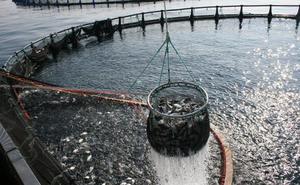 El auge del pescado cultivado