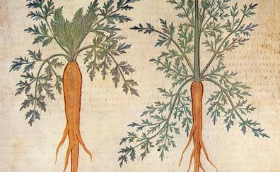 Las zanahorias fueron naranjas mucho antes que los Orange
