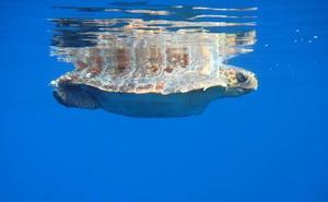 Nuevas medidas para conservar los cetáceos