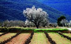 Rioja Baja se replantea el cambio de nombre ante el futuro desarrollo de los vinos comarcales