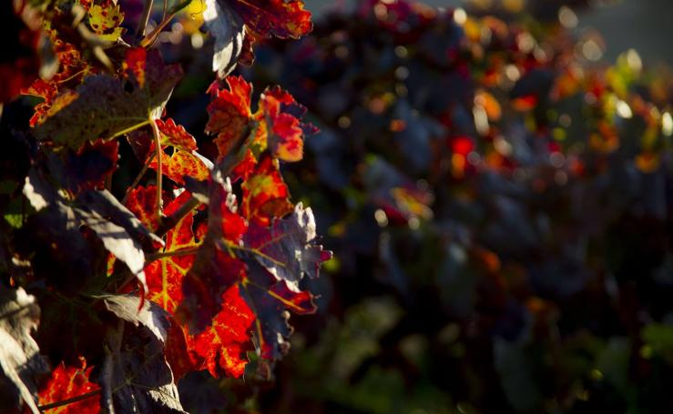 Las viñas riojanas, en otoño