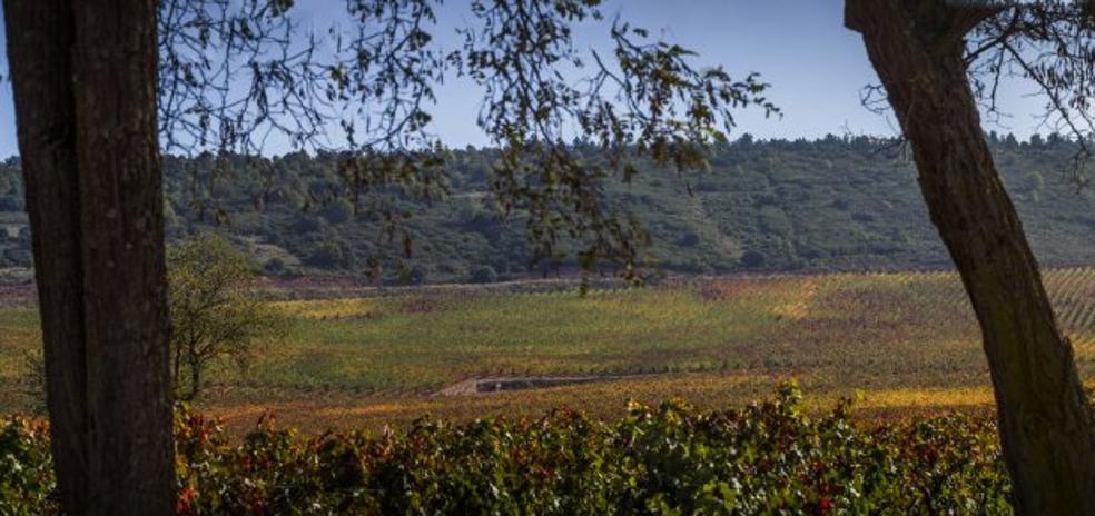 Las visitas de enoturismo caen en La Rioja Alta mientras crecen en toda España