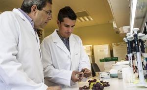 El ICVV identifica la mutación paraeliminar las pepitas de cualquier uva