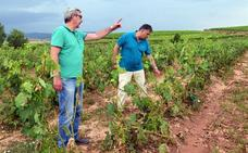 Siete mil hectáreas de viña dañadas, balance de la peor granizada en 5 años