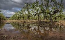Rioja sigue esperando un 'cosechón' pese a la piedra y a los daños de mildiu y oídio