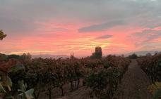 Aromas y sabores de Rioja Alta