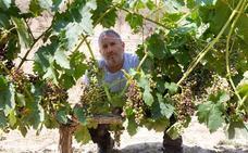 El mildiu desata la alerta en las viñas