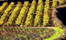 El Gobierno de La Rioja sigue firme en la candidatura del paisaje del Rioja