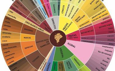¿Qué es la rueda de aromas?
