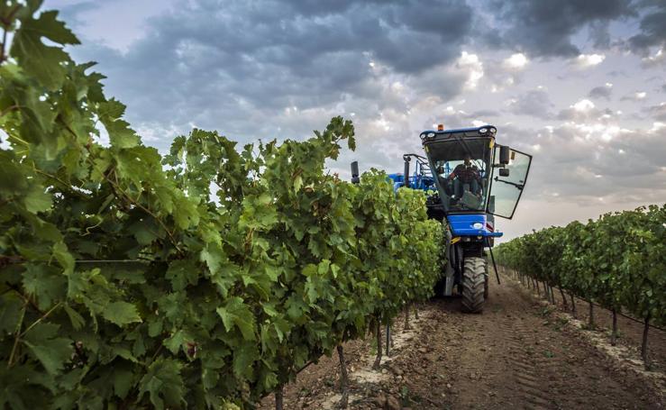 Comienza la vendimia en Aldeanueva de Ebro