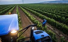 El Consejo Regulador habla de una evolución «correcta» de la vendimia en Rioja
