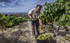 El riesgo de botrytis tras las últimas lluvias vuelve a desasosegar a viticultores y bodegas