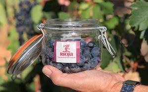 El viñedo en Rioja ofrece buen estado sanitario aunque se aconseja vigilancia