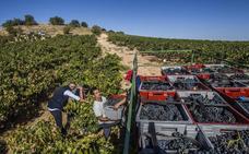El Consejo cierra la vendimia en once localidades de La Rioja Baja y Navarra
