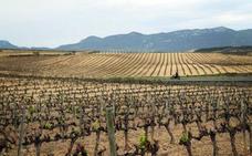 Investigadores de la UR lideran un proyecto sobre el impacto del cambio climático en la DOCa Rioja