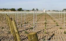 El Gobierno actualiza la norma para autorizar nuevas plantaciones de viñedo