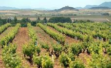Rioja crecerá entre 1.200 y 2.000 hectáreas, según la venta de vino