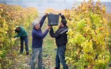 El Programa de Apoyo al Sector Vitivinícola repartirá 79 millones en ayudas en La Rioja