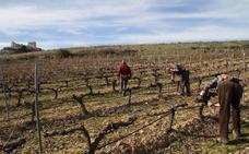 El Ministerio autoriza 4.747,5 hectáreas de nueva plantación para este año