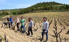Ocho jóvenes viticultores y un mismo destino: San Vicente de la Sonsierra