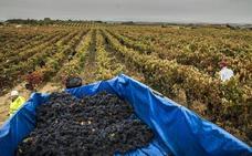 Mal año para el Rioja