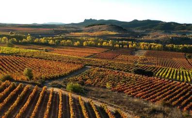 El PSOE advierte de la próxima caducidad de hectáreas de viñedo adjudicadas en el 2016 que no se plantan por miedo