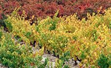 EH Bildu afirma que Rioja Alavesa «no tiene futuro bajo el yugo de Logroño»