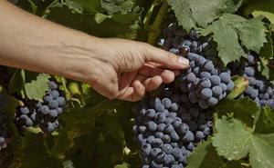País Vasco, Navarra y La Rioja relanzan la candidatura del Paisaje del Vino como Patrimonio Universal