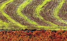 La nueva norma reguladora de suelo no urbanizable incluye el paisaje vitícola