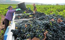 La cántara de vino cae por debajo de los 18 euros
