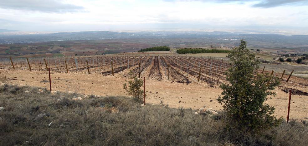 Reconocen el acceso al reparto de plantaciones a la propietaria de una empresa agraria de Alfaro