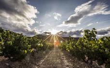 Los primeros 84 Viñedos Singulares de Rioja: 43 en Rioja Alavesa, 31 en Alta y 10 en Oriental