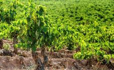 La cosecha del Rioja de 2019 apunta a ser muy buena en calidad