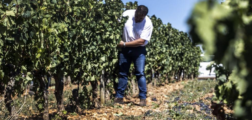 Rioja espera una añada que puede ser histórica