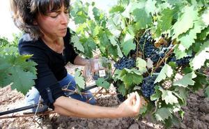 La vendimia en Rioja lleva 10 días de adelanto