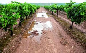 Las lluvias paralizan la vendimia y lanzan el primer aviso al llegar con altas temperaturas