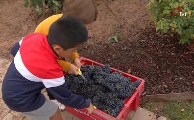 Los niños disfrutan la vendimia infantil en Viña Real