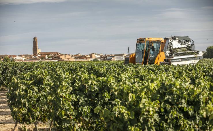Pistoletazo de salida a la vendimia de Rioja en Aldeanueva