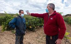 El coronavirus marca la vendimia de este año en Rioja