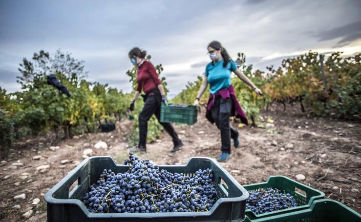 Vitivinicultura. Aprender en la tierra del Rioja