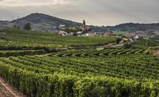 Las ventas de vino se estancan en julio y presionan los precios para la vendimia