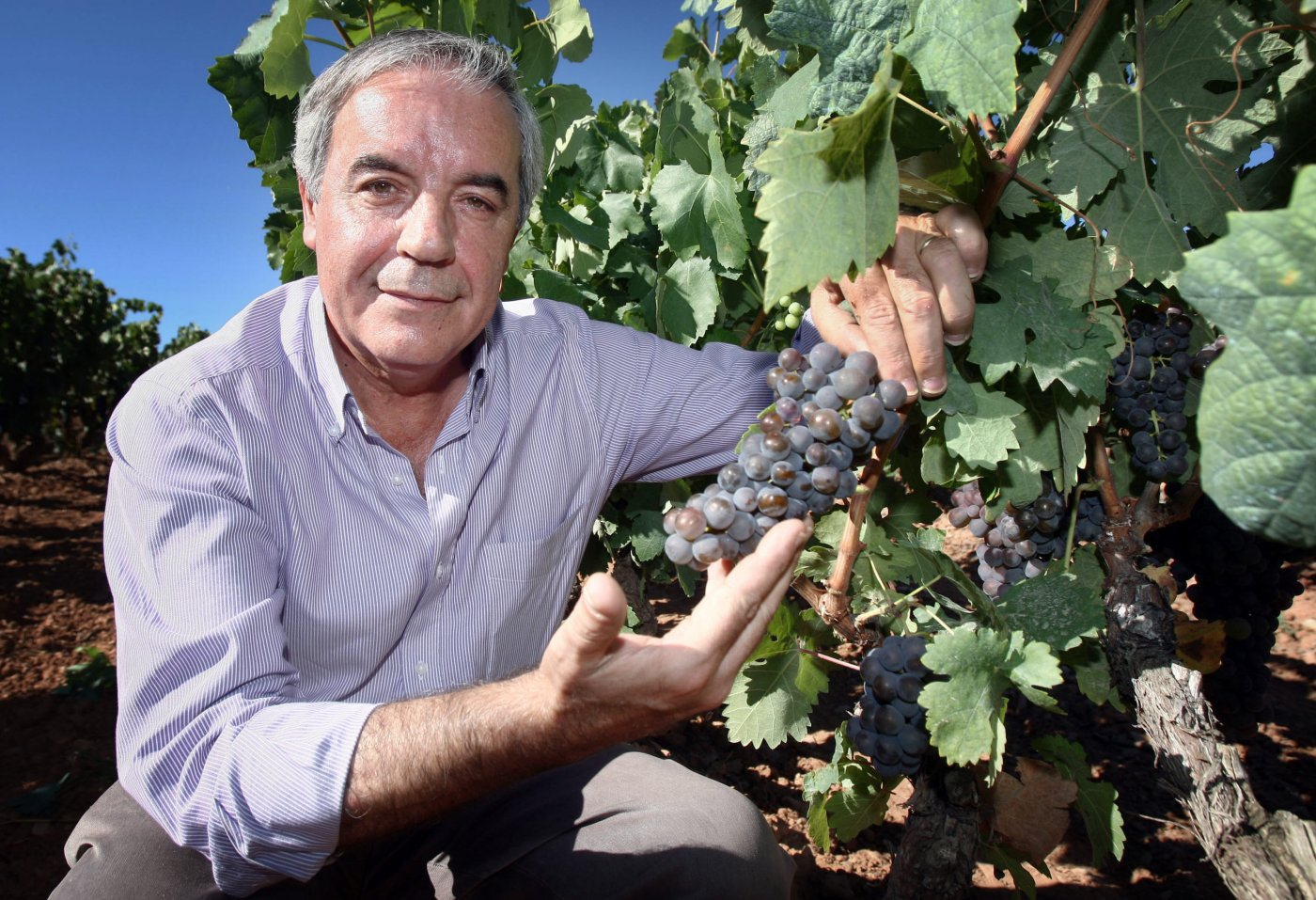 «Rioja trabaja en dos divisiones y la clave es garantizar la convivencia de ambos modelos de viticultura»