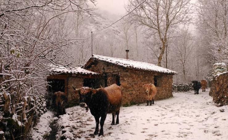 Temporal de nieve en La Rioja (II)